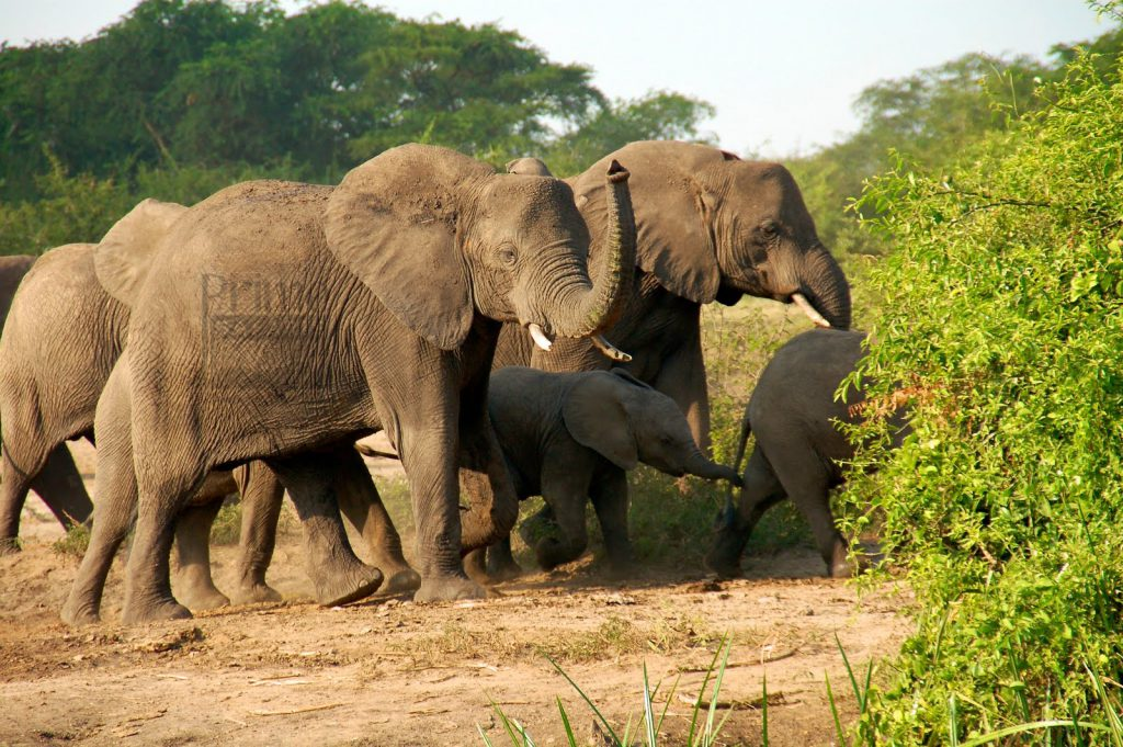 Kidepo-National-Park-elephants-1