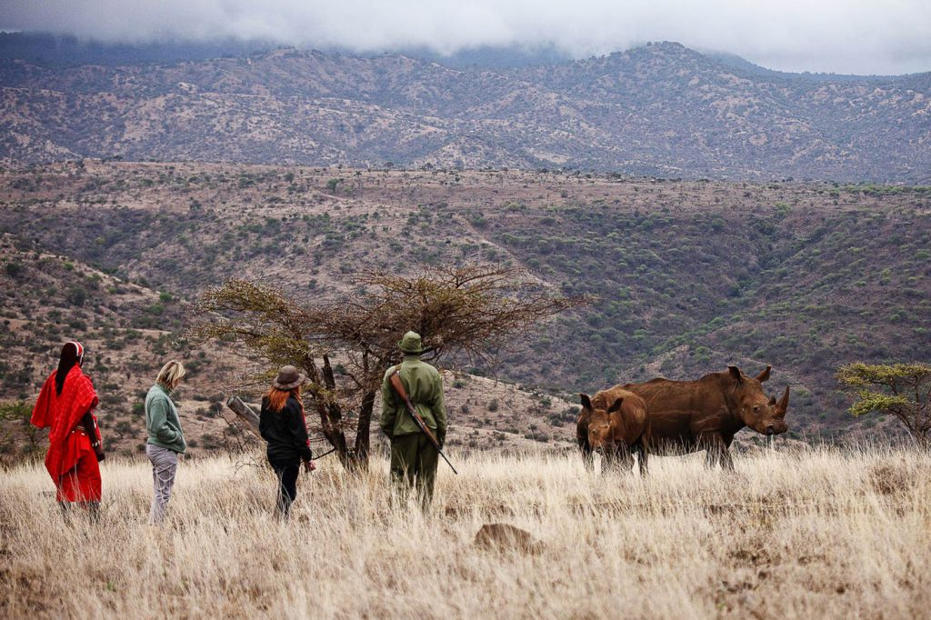 guided-walks-lewa-wildlife-kenya-timbuktu